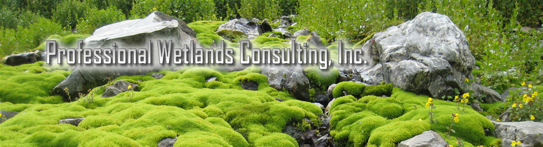 Professional Wetlands Consulting, Inc.
